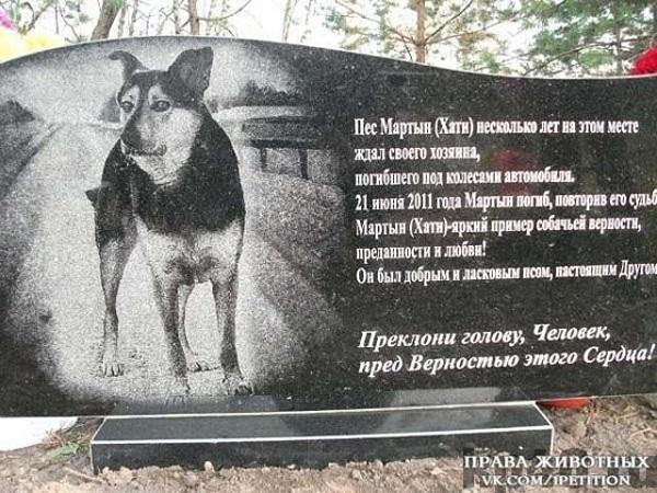 Памятник верному псу - Преклони голову, Человек