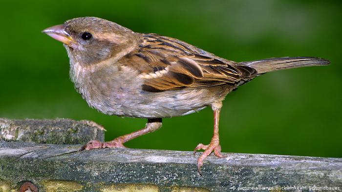 Почему в городах Германии мало птиц