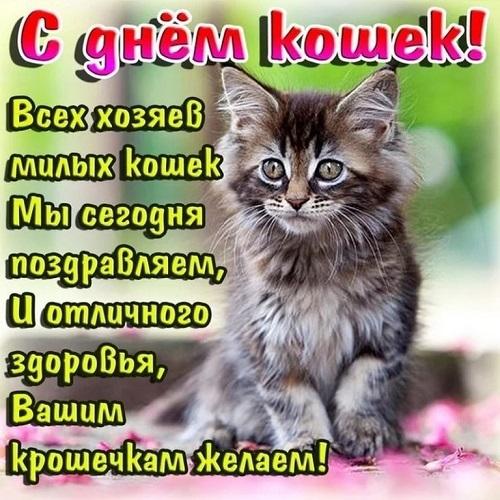 1 Марта — Всемирный день кошек...в России