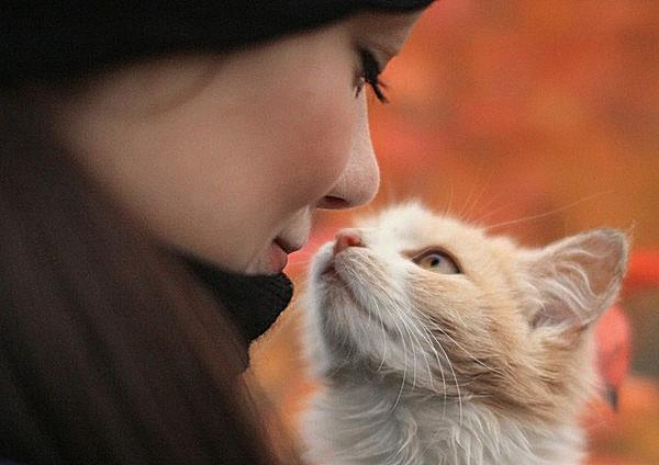 Нераскрытые тайны кошек