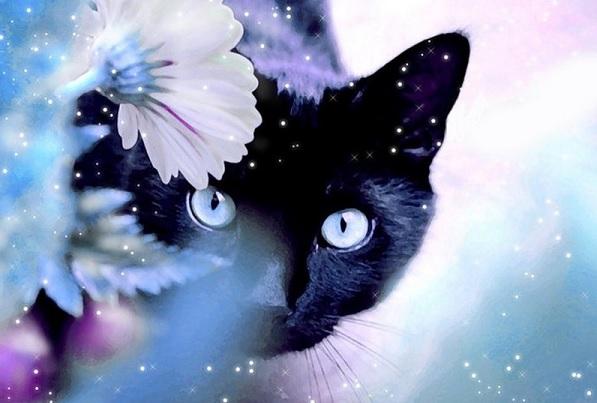 Наиболее частые симптомы заболеваний у кошек