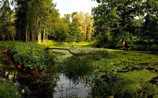 Сукино болото. Мистическое место в Москве