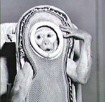 Обезьяна-астронавт
