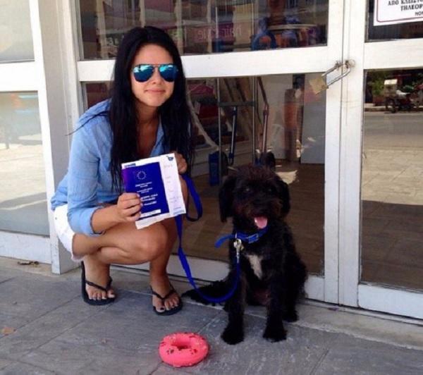 Женщина забрала с Крита бездомную собаку, которая спасла ее во время отпуска
