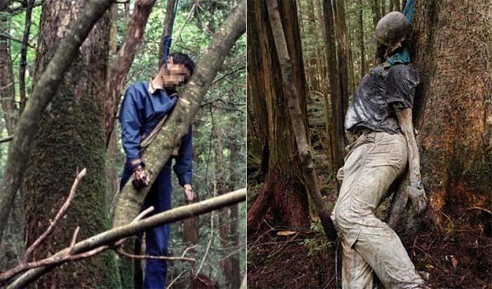 «Лес самоубийц» в Японии