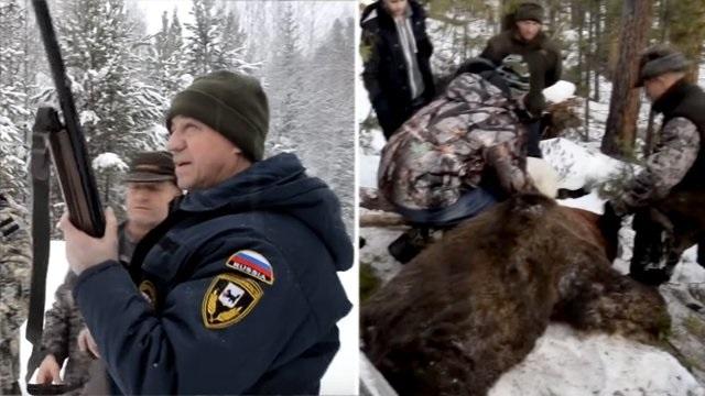 Смелый губернатор застрелил спящего медведя и теперь ему грозит до 5 лет лишения свободы
