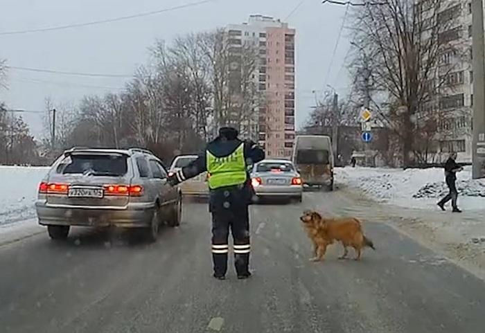 Инспектор ДПС, остановивил машины из-за хромого пса, до этого спас жизнь девушке