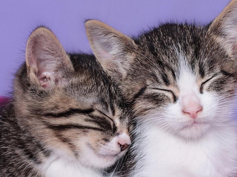Кое что о кошках