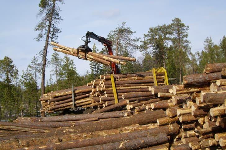 Как спасти русский лес, а затем и Россию?