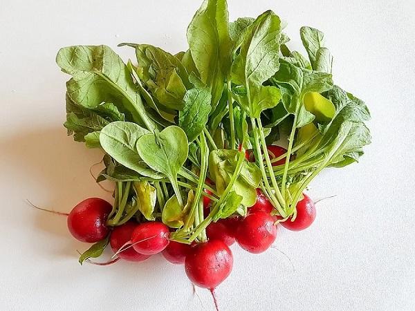 Целебная ботва… Чем полезны листья редиса
