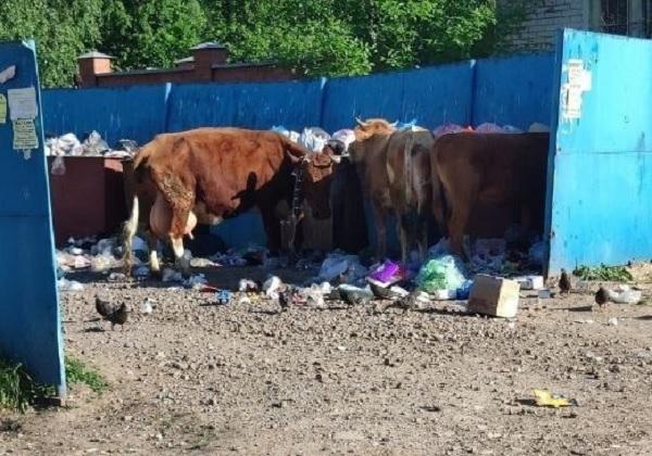 В уральском городе открыли штрафстоянку для бродячих коров