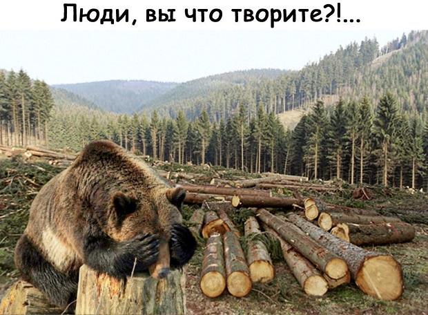 Медведи бегут из горящих лесов...