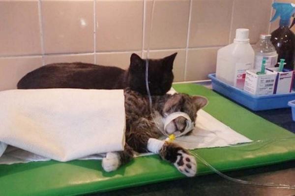 Хвостатая медсестра: спасенный кот теперь сам ухаживает за больными животными из приюта