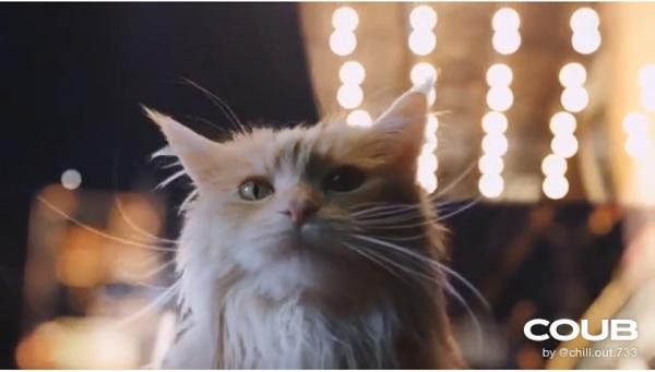 На этого котика можно смотреть вечно!