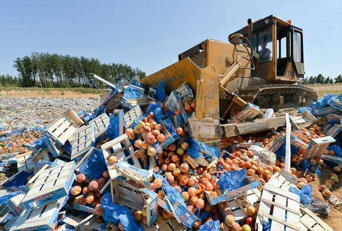Дикая бюрократия торговля потратит 1,4 млрд. руб. на истребление еды