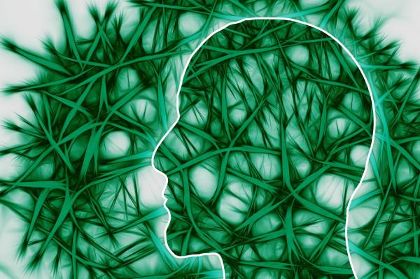 neural-pathways-221718_1280.jpg