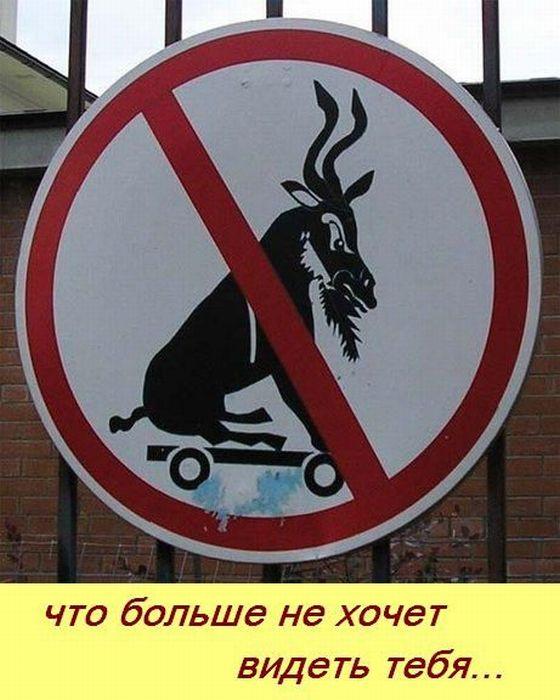 1311620390_nemnogo-o-kozlakh-25-foto-(www.votrube.ru)12