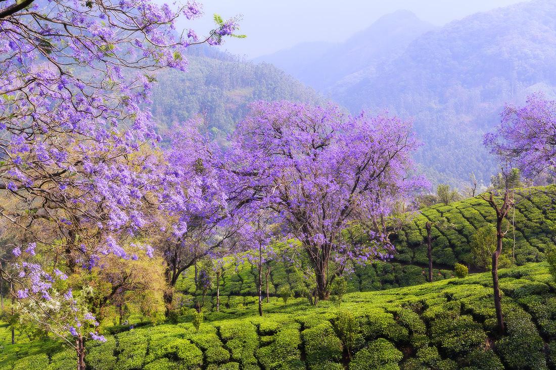 India-Kerala-trip--3).jpg
