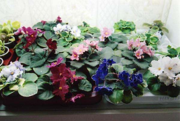 Мои цветы дома