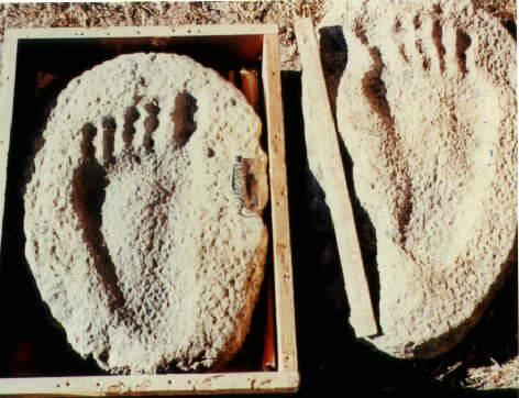 foot_629ndnd1