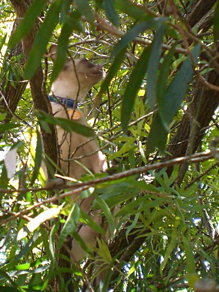 Jasmin up a tree