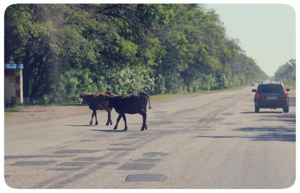 Дорога в Шелек
