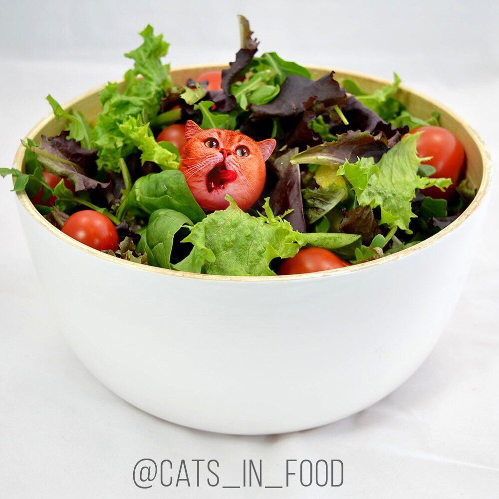 Cats in Food . Котики в еде! Шок!