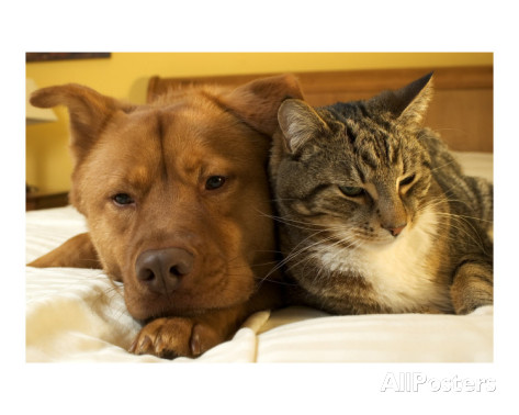 michael-pettigrew-dog-and-cat-together