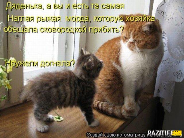 1329074576_kotomatrix_25