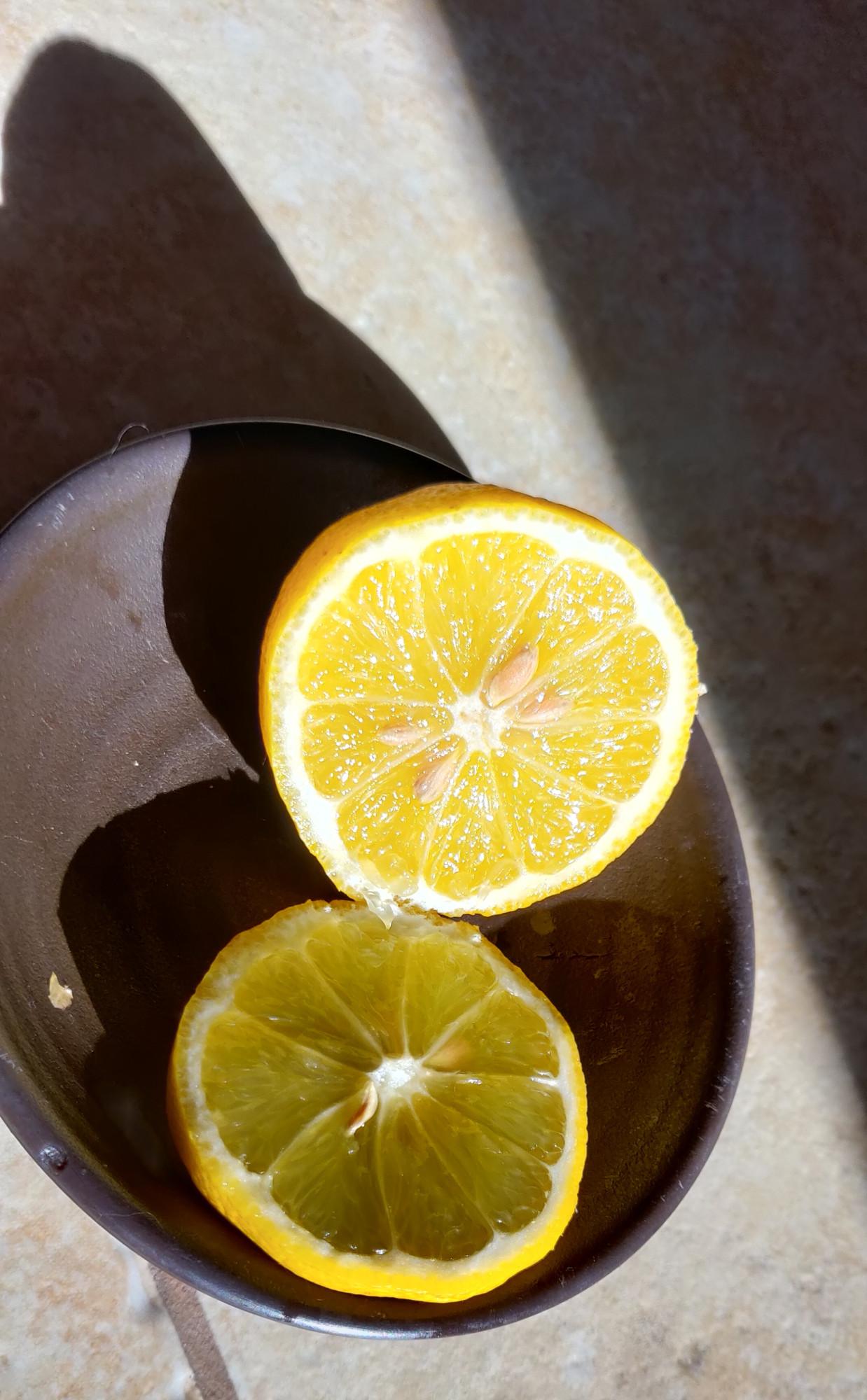 Скоро зацветут лимоны. Все в бутонах.