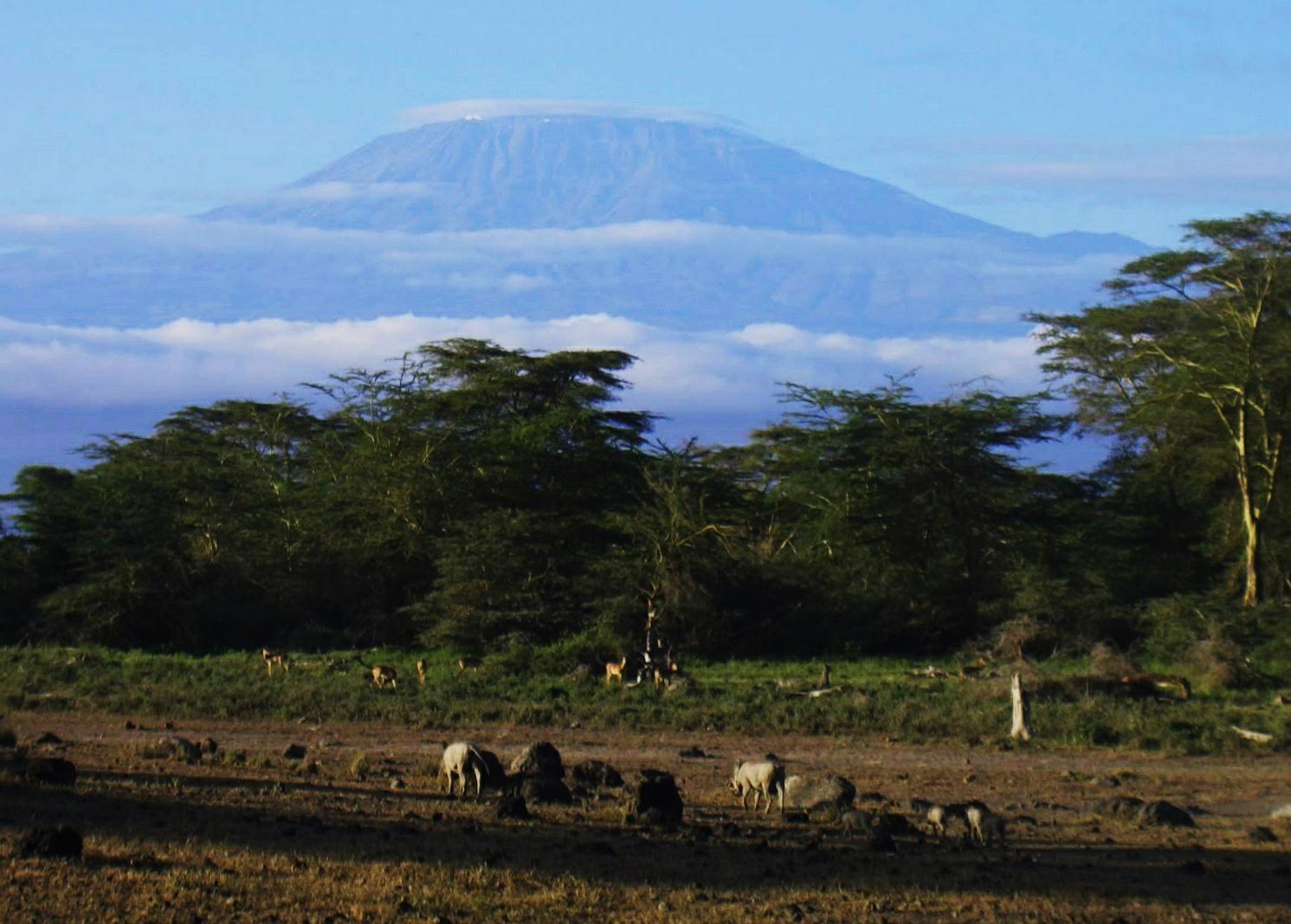 Килиманжаро  - символ Африки. Величественная вершина вулкана. Почти 6000 м. Обычно скрыта облаками. Мне удалось один раз ее сфотографировать.
