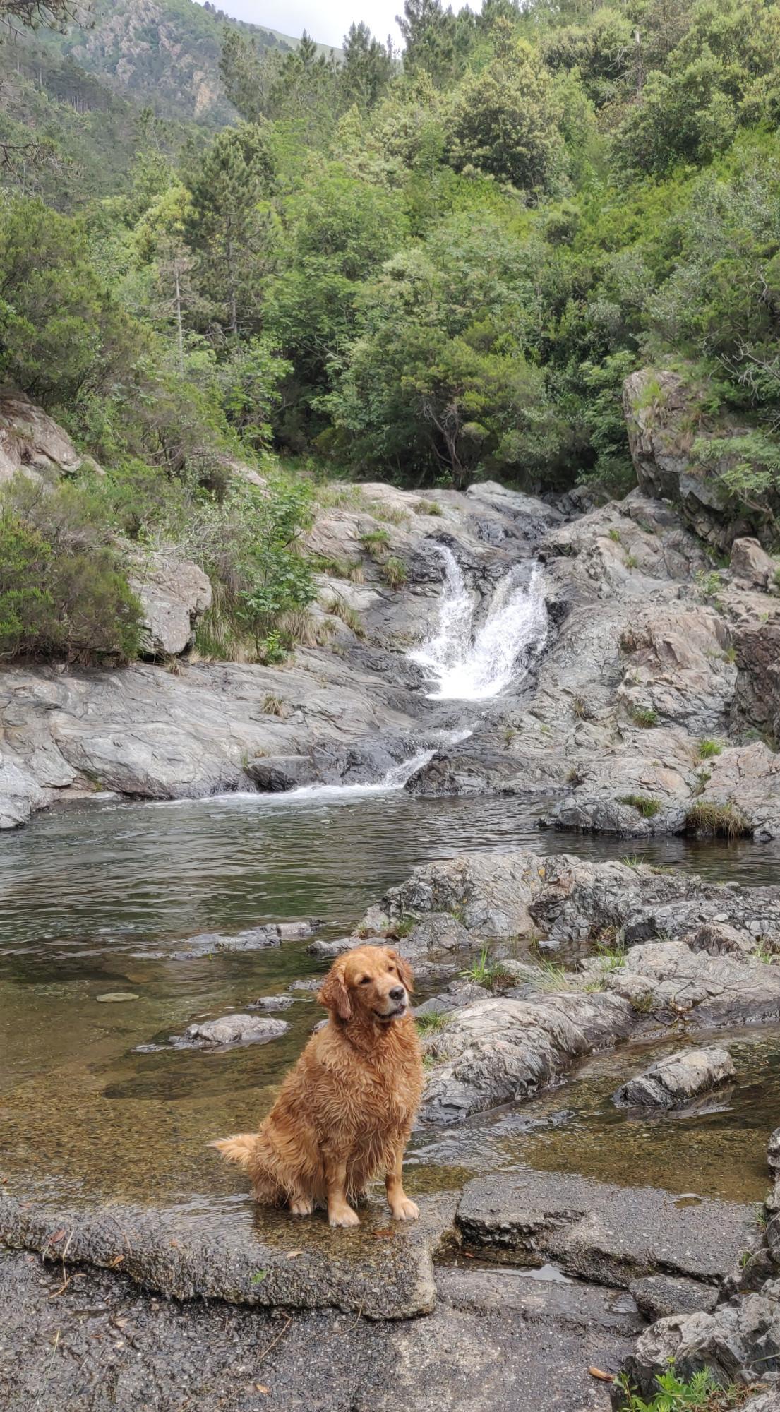 У озера встретилась рыжая собака с ласковым именем Лола.