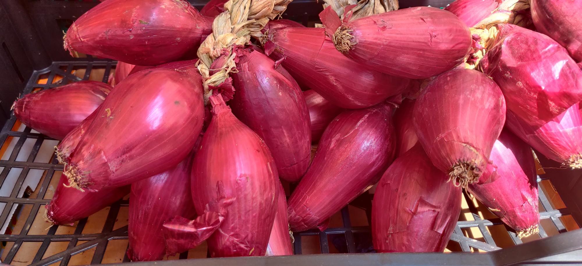 Это знаменитый красный лук из Трапани. Уже собрали новый урожай