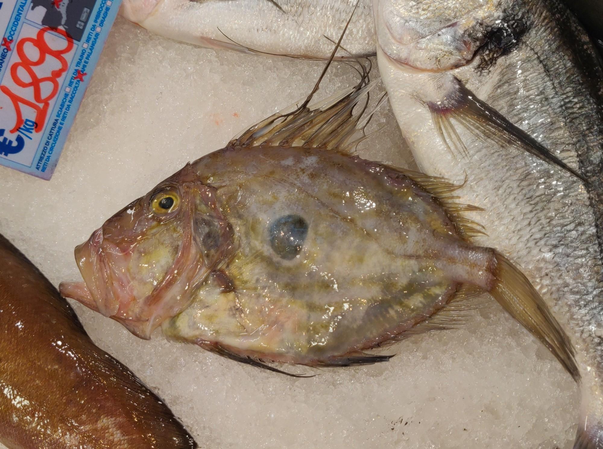 В рыбной лавке купили анчоусов. Мелких.Это рыба сан Петро. Так нам сказали. Мне кажется она удивилась...