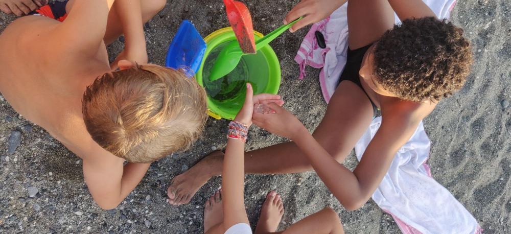 Дети поймали двух медуз и мучали их в ведре