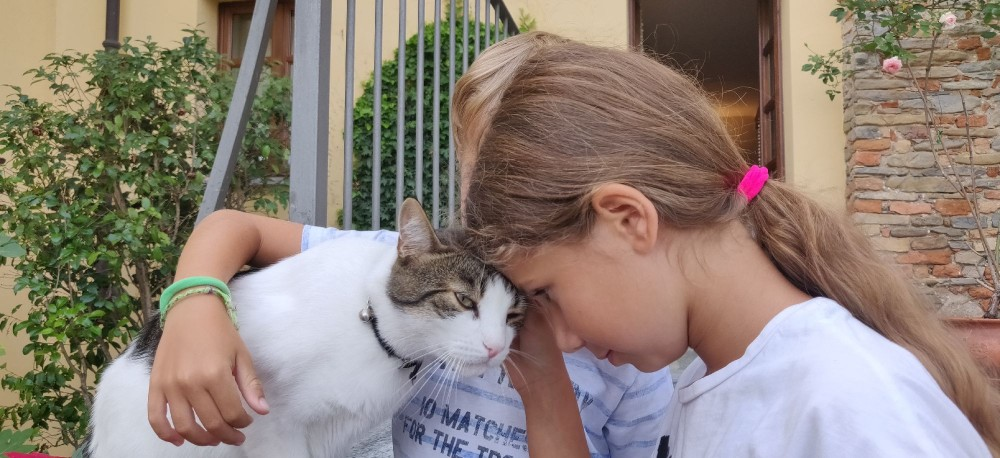 А обниматься можно только с кошками