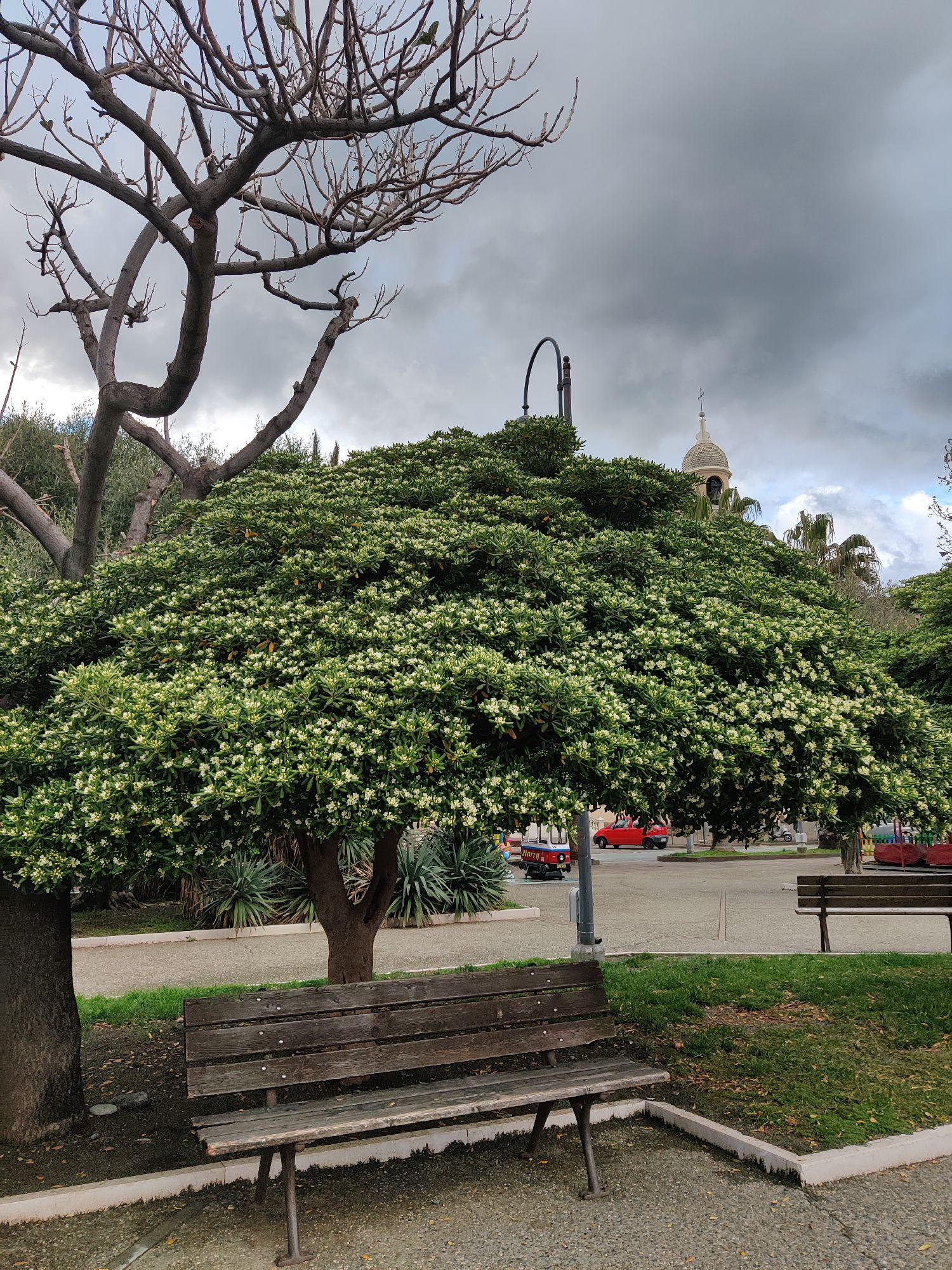 Мне очень нравятся деревья.