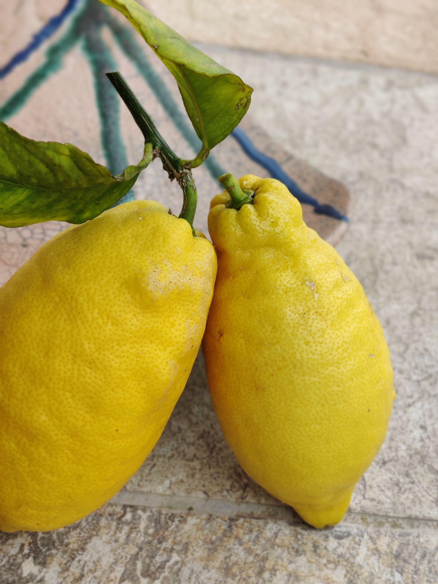Последние лимоны с дерева. Сейчас цветут вовсю.
