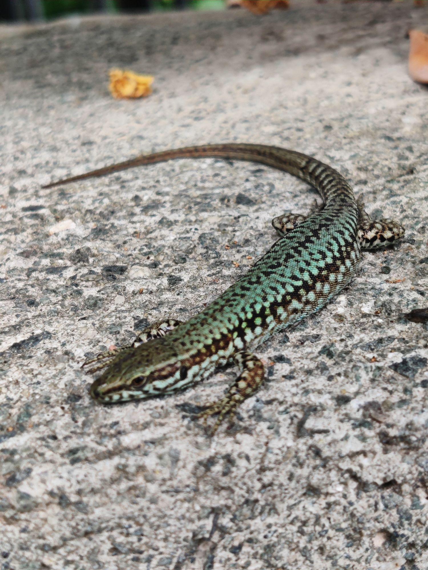 Этих зверей я не боюсь. А вот на тропе мы видели длинную змею.