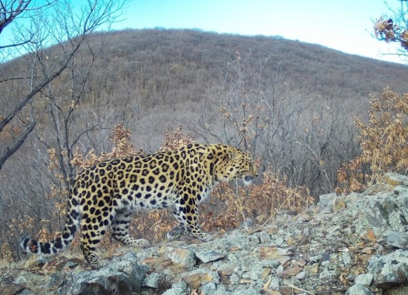 Фотографии - КГБУ «Дирекция по охране объектов животного мира и ООПТ».
