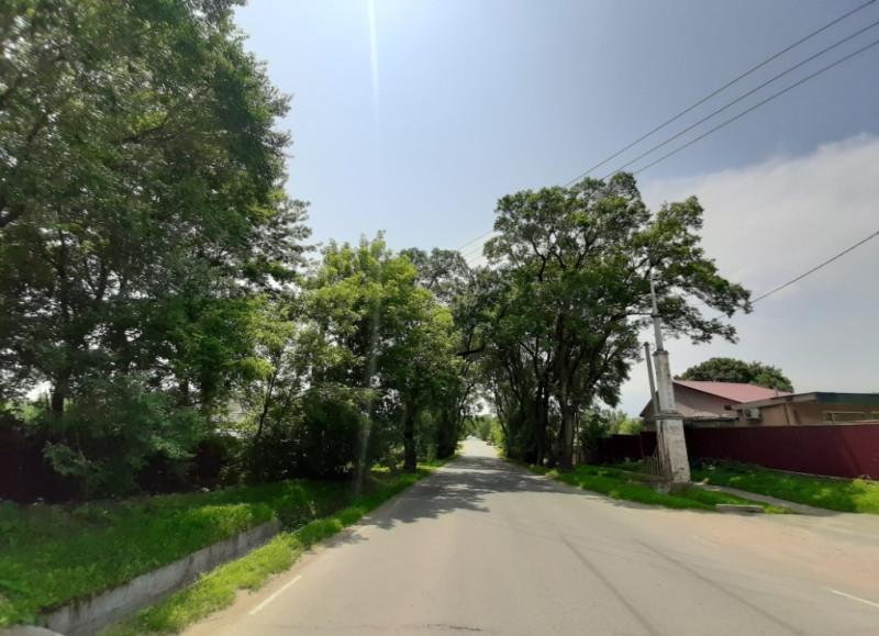Колонна с левой стороны дороги закрыта деревом.