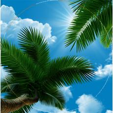 120x120 пальма