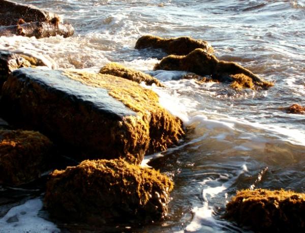 край моря