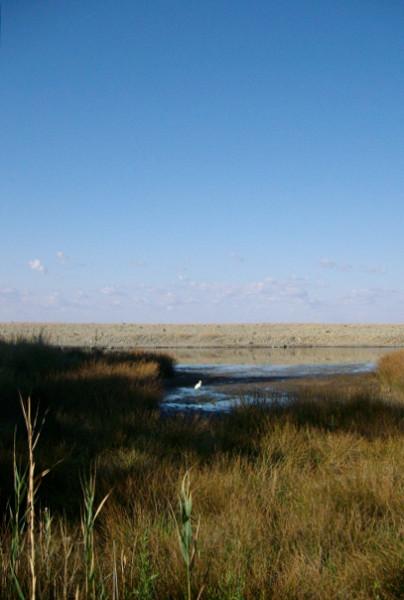 озеро белой цапли