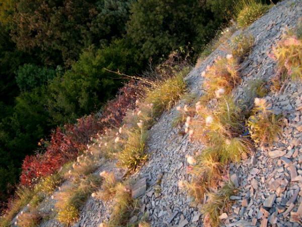 склон, с которого верхушки деревьев выглядят как заросли пушистого мха