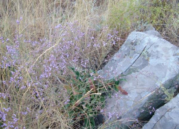 трава и камни