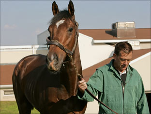 Barbaro, April 2002-January 29, 2007