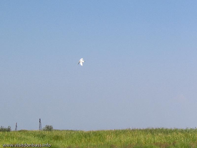 Белосарайская коса - место гнездовья птиц, в том числе редких видов
