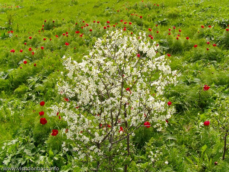 Весной в Хомутовской степи начинается период массового цветения цветов и других растений