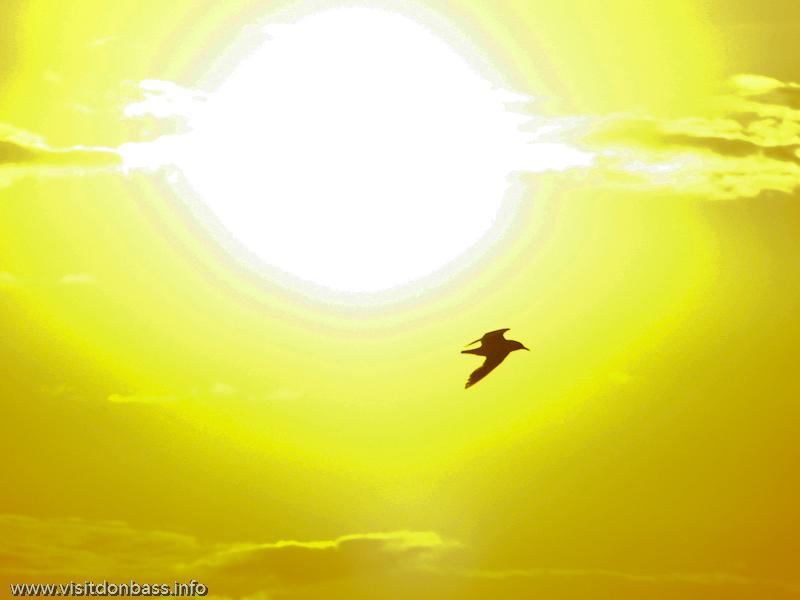 Бакаи в Сопино - птичий рай